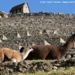 Fotos fra Inkastien - Inkastien dag 4 Caretakers Hut Machu Picchu Happy Lama Travel